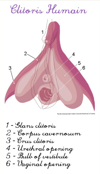 Can Women Take Viagra? - Superdrug Online Doctor